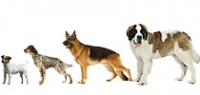 Программа питания для собак различных размеров (SHN)