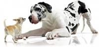 Программа питания для собак определенных пород (BHN)