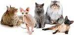 Программа питания для кошек определенных пород (FBN)