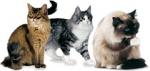 Программа здорового питания с доказанной эффективностью, подтвержденной исследованиями(FCN)