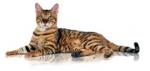 Программа здорового питания, учитывающая возраст и активность Вашей кошки(FHN)