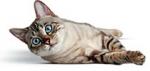 Программа здорового питания для кошек - влажные рационы(FHNW)