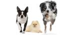 Три продукта, учитывающих образ жизни собак (LHN)